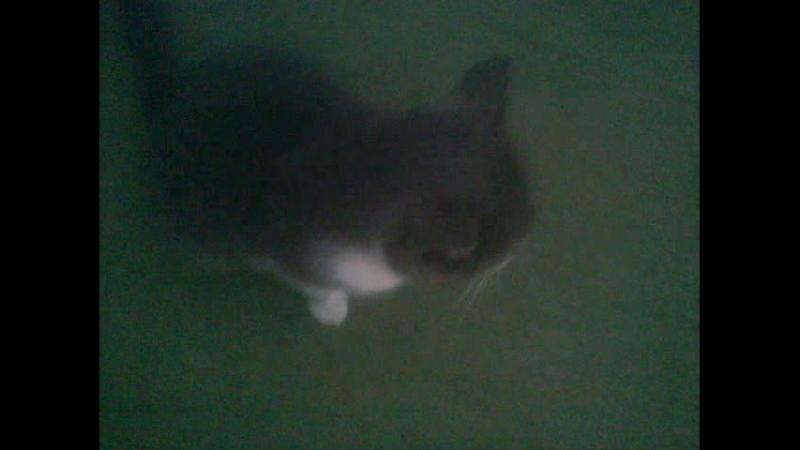 коты видео 2