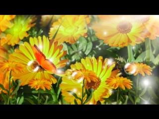 Скачать футаж видеофон Лето цветы