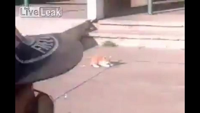 Francia immigrato musulmano si diverte a lanciare un povero gattino... Ride della sofferen.mp4