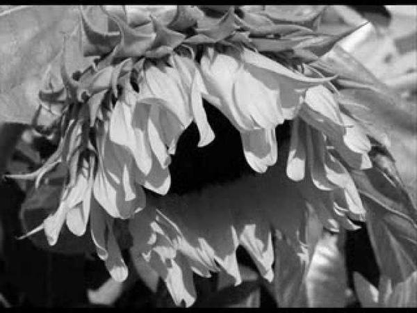 Adriano Celentano - Ti lascio vivere (with reprise)