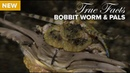 True Facts Bobbit Worm and Polychaete Pals