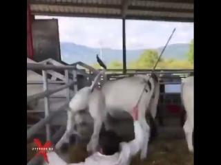 Удар Ван Дамма