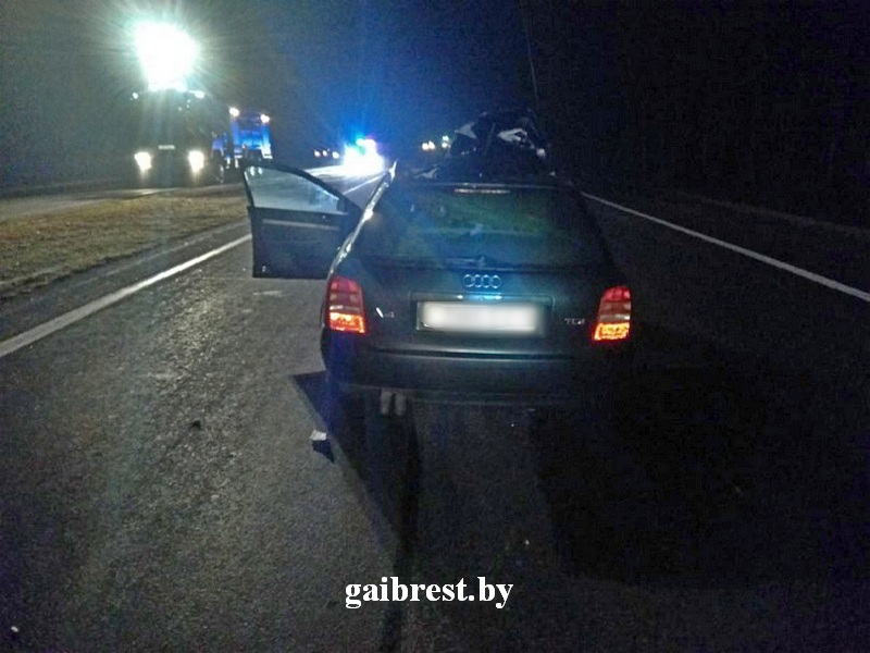 Подробности от ГАИ о ДТП на трассе М1, в котором женщина на AUDI столкнулась с лосями
