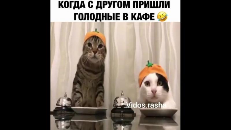 культурные кошки