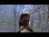 Eagle's flight - ERNESTO CORTAZAR
