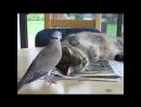 котик и голуби