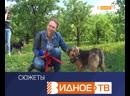 Человек собаке друг - благотворительная акция в приюте Домашний