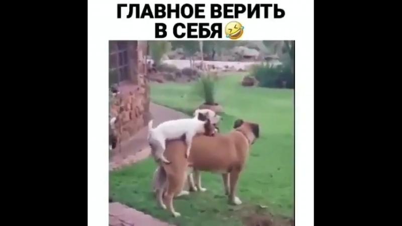 Главное верить)