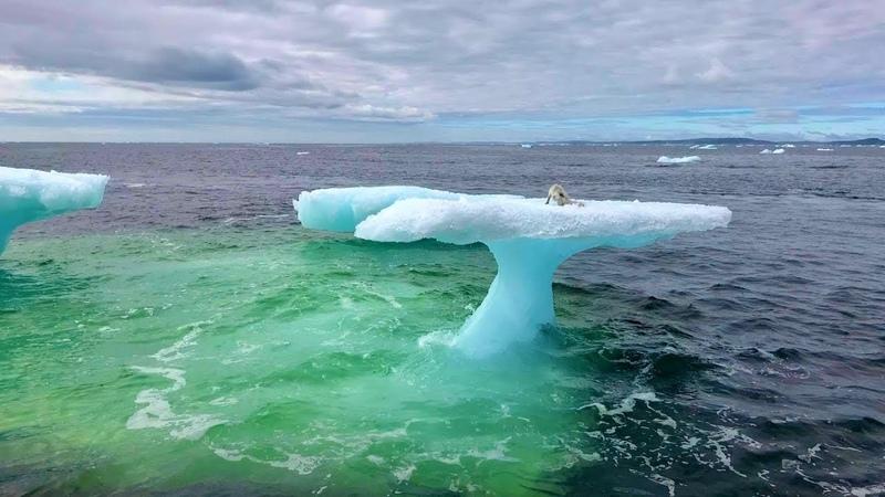 빙산 위에서 물개 발견한 어부들. 그러나 진짜 정체 알고, 즉시 배를 돌4714