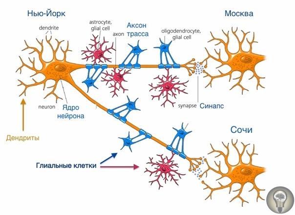 Что такое мысль, и как она возникает Нейробиология мысли