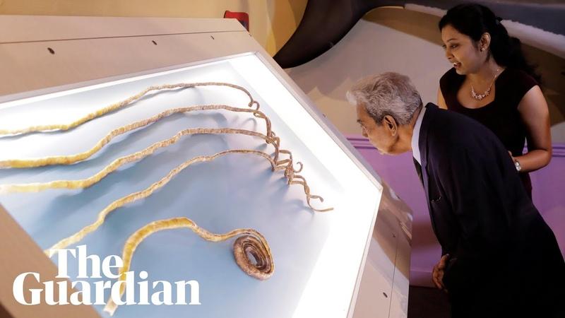 Man with worlds longest fingernails finally cuts them off