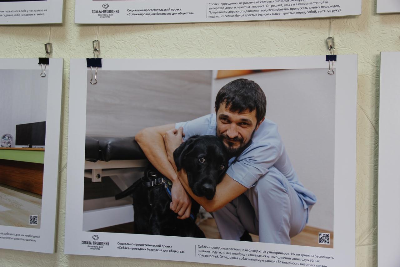 Проект «Собака-проводник безопасна для общества»