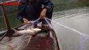 Thả lưới bắt cá sáng nay được cá trắm cỏ cá mè khủng Today Fishing