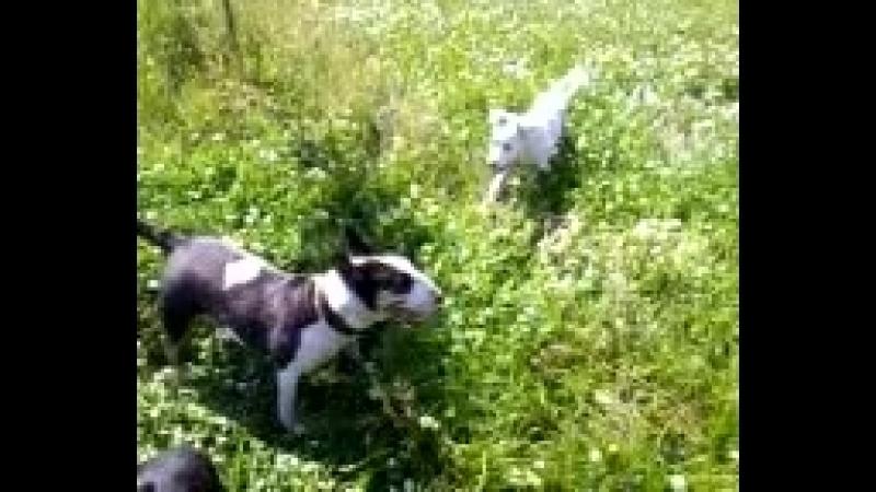 Видео-0024 Это их собачье счастье,а они моё одинокое счастье.