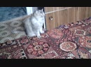 Наша кошка Муся 12.01.19