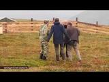 Развитие эко-туризма на Колыме На остров Завьялова завезли овцебыков