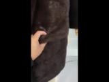 скандинавский мех. цвет норки соболь
