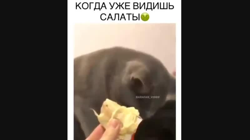 буэээ кот