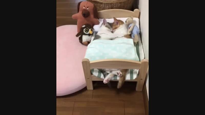 сладких снов...