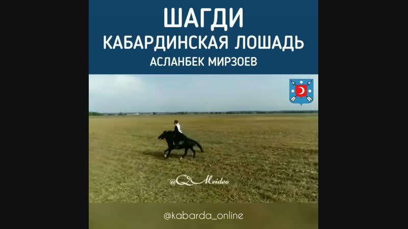 Асланбек Мирзоев на кабардинском скакуне по кличке Баксан