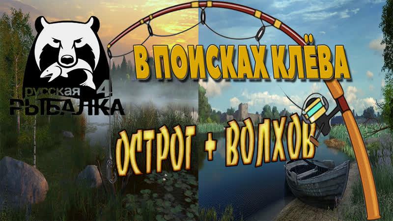 РУССКАЯ РЫБАЛКА 4 - В ПОИСКАХ КЛЁВА, ОСТРОГ ВОЛХОВ!