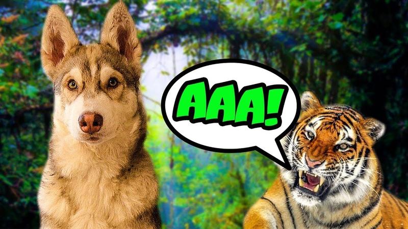 Я СОЖРАЛ ТИГРА Хаски Бублик Говорящая собака