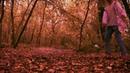 Пинаю листья. Осень