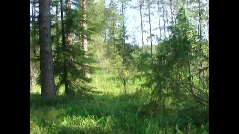 послушайте тишину леса