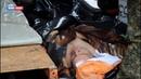 ЛНР передала Минобороне Украины тело очередного горе-диверсанта ВСУ