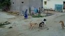 Dogs fighting.... || kukala gola || childrens crying || yallala