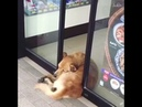 Lazy Dogs Compilation