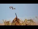 Три вида охот на гуся. На перелете с чучелами на поле с подхода СМЕШНО до упада