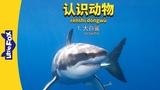 Meet the Animals 1: Great White Shark (认识动物 1:大白鲨) | Level 2 | Chinese | By Little Fox