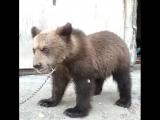 Медвежий угол оправдывает название