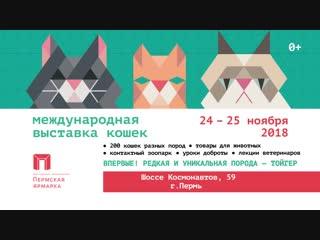 Международная выставка кошек  2018
