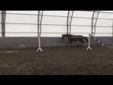 Нелли прыжки на свободе