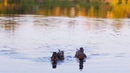 Утки на пруду, природа г.Чайковский / Mini World