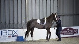 Horse refusing to stand at mounting block meets Richard Maxwell Your Horse