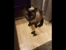 Кот Софий поймал летучую мышь