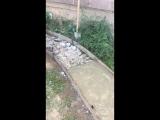 Карлик узбек