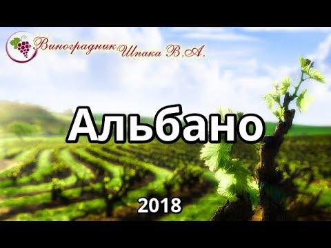 Альбано урожая 2018 года