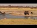 Слоны шугают маленьких крокодилов