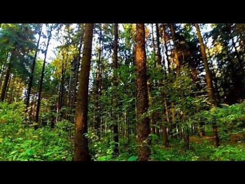 А па лесу я иду тяпкой кролика в глушу