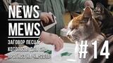 News Mews #14. КОТОНАБЛЮДАТЕЛИ