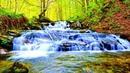 Шум ручья в лесу, пение птиц. Расслабляющие звуки воды - 8 часов для глубокого сна