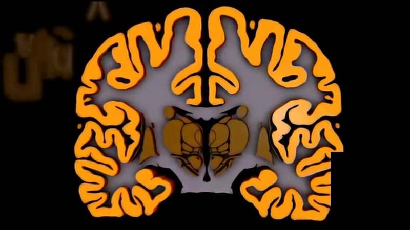 Анатомия полушарий большого мозга fyfnjvbz gjkeifhbq ,jkmijuj vjpuf