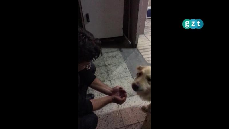 Полицейский с ладоней напоил жаждущую собаку