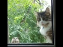 Karen open the window please Bit of a situation out here