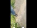 Лысые коты на прогулке