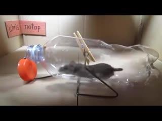 Гениальная мышеловка из пластиковой бутылки